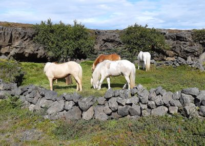 lavahorses_daytours6
